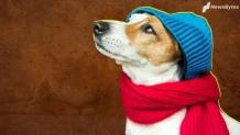 Five tips to take care of your pets during winters