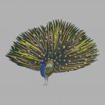 Cre8iveSkill's Beautiful Peacock Machine Embroidery Design