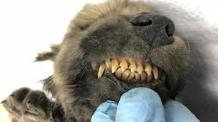 Mysterious puppy, frozen for 18,000 years, found in Siberia