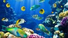 Five of the most colorful and beautiful ocean creatures