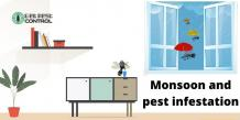 Monsoon and Pest Infestation – How to Prevent Yourself