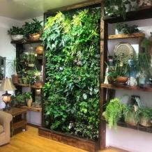 How to Maintain your Indoor Vertical Garden?