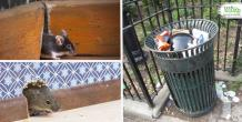 Effective Ways To Protect Your House From Rodents