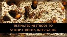 UltimatedMeethods to Stoop Termites' Infestation