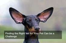Free Pet Magazine - Free Pet Magazine
