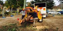Tree Removal Services and Their Expertise