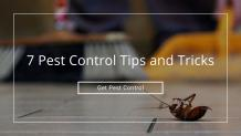 7 Pest Control Tips and Tricks
