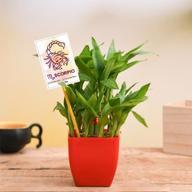 Online Shopping for Lucky Bamboo Tree Plants for Office & Home Delivery @ Low Prices