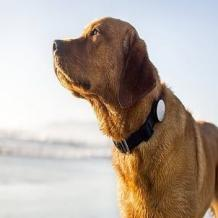 Best Pet Care Services in Chennai, Hyderabad - ThePetCare