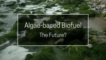 Pros and Cons of Algae-Based Biofuel