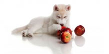 Can Dog Eats Apple | are apples good for dogs | petsfoodnutrition.com