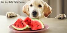 Can Dog Eats Watermelon | petsfoodnutrition.com