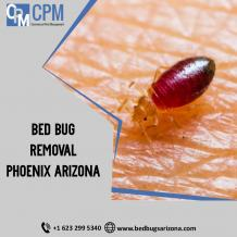 Where Do Bed Bugs Hide And What To Do For Bed Bug Removal?
