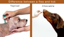 Top Flea and Tick FAQs in 2020 - Communal News