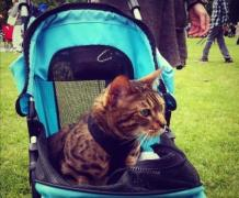 Cat stroller