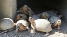 Tortoises Advice and Care