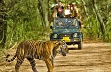 Top Places to Visit for the Best Wildlife Experience in India