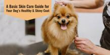 Guide to Make Your Dog's Coat Shiny & Healthy [Infographic]
