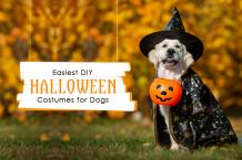 Easiest DIY Halloween Costumes for Dogs in 2021