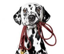 Dog Trainer Rhodes