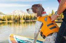 Buying Guide To The Best Dog Life Vest | PetsOnJourney.com