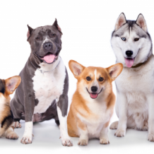 Dog Trainer Roselands