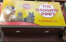 Pet Shop in Civil Lines | The Naughty Dogs | Healserv