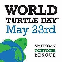 Turtle and Tortoise Rescue