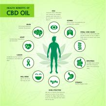 Endocannabinoid System 101 | CBD for athlete | Elemental CBD