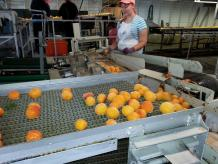 Food Processing Market in India
