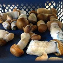 Buy magic Mushrooms Online - Buy LSD online - Legal psychedelics
