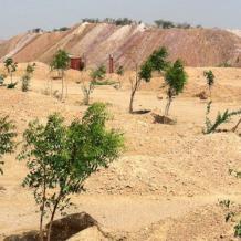 Green Desert Landscaping, Desert Agriculture