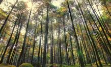 Pesona wisata alam Gunung Pancar dengan hunian mewah di Sentul Bogor