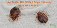 How To Get Rid Of Bed Bugs Naturally From Your Home?