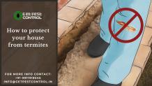 How to protect your house from termites
