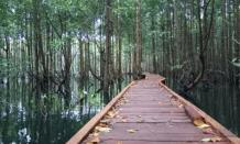 Hutan Mangrove Wana Tirta, wisata alam yang menarik dan kekinian di Kulon Progo