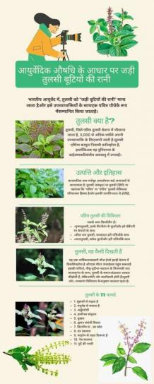 Basil In Hindi - Tulsi, Properties and Benefits of Indian Holy Basil - Fopeez