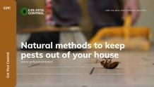 Natural methods to keep pests out of your house