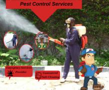 Best Pest Control Services    Major Pest Control