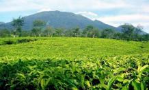 Wisata alam Agrowisata Gunung Mas yang sejuk dan menawan di Puncak Bogor