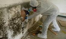 ALL YOU NEED TO KNOW ABOUT MOLD INSPECTION - AtoAllinks