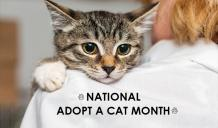 National Adopt a Cat Month - Help a Cat Reach It's Forever Home
