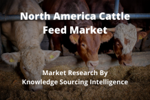 North America cattle feed market