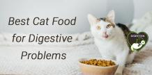 Best Cat Food for Digestive Problems | Our Pet Warehouse