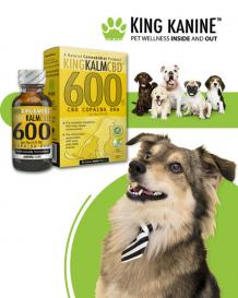 CBD Benefits for Dogs