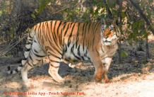 How to book Pench National Park Jeep Safari?