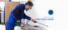Pest Control Services in Fulham and Greenford
