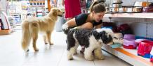 Here's What All New Pet Parents Should Know