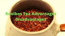 Rooibos Tea Advantages Disadvantages Nutrients Preparation Process