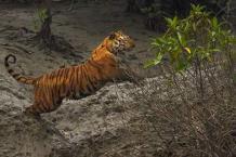 Sundarban Tour with Royal Bengal Tiger